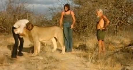 Regasire – Leu in salbaticie si oamenii care l-au crescut