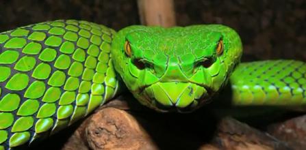 Comoara biologica a Mekongului, peste 1.000 de specii noi