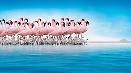 Documentar extraordinar Disney pentru protejarea flamingilor