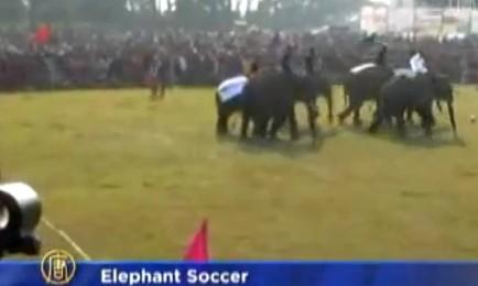 Elefantii sunt talentati la fotbal