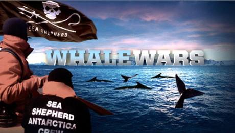 Razboiul balenelor: Confruntarea cu vanatorii japonezi