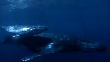 """Vanatoarea de balene """"la limita Pamantului"""""""