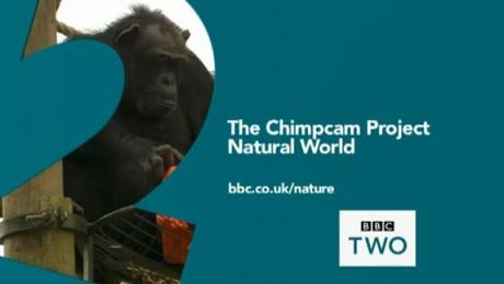 Primul film din lume creat de cimpanzei