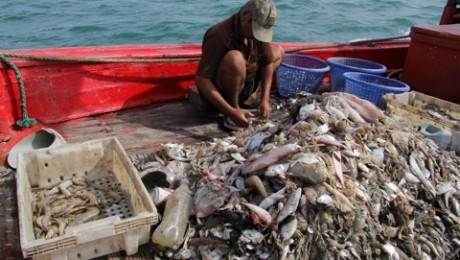 Macinandu-l pe Nemo: care este costul real al crevetilor thailandezi?