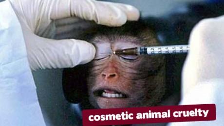 Interdictia comercializarii produselor cosmetice testate pe animale a intrat in vigoare
