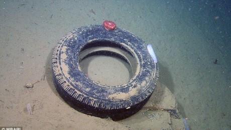 Pacificul transformat intr-o groapa de gunoi (Video)