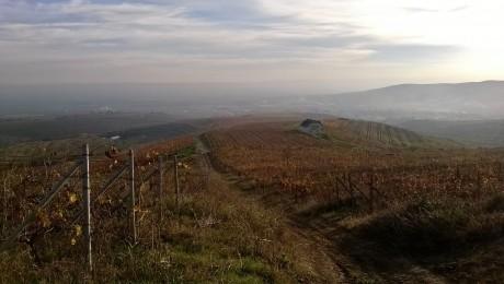 Cicloturism: Peste 5.000 de biciclisti ar putea vizita anual zona Urlati – Dealu Mare