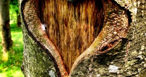 Heart-of-the-Forest-4ce22f4778b4d