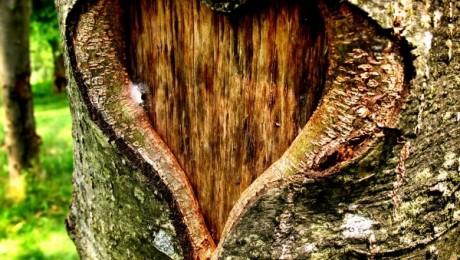 Ziua Pădurilor sărbătorită la nivel internațional (Video)