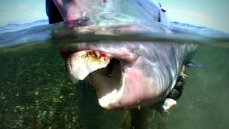 ONU: Pescuitul excesiv al unei specii endemice din Marea Caraibilor duce la distrugerea recifelor de corali