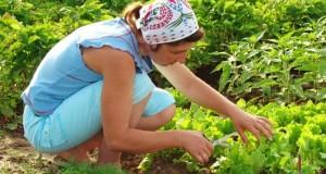 agricultura-ecologica-in-2011-scurt-raport-statistic-76