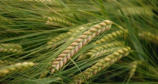 3-organic-agriculture