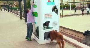 În Istanbul se află pe străzi peste 150.000 de câini fără stăpân