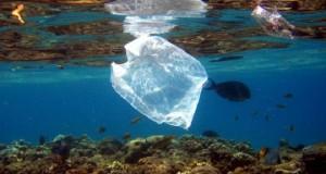 Fish swim near a plastic bag along a coral reef
