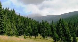 Romsilva va utiliza peste 6,5 milioane de puieți forestieri în campania din această toamnă
