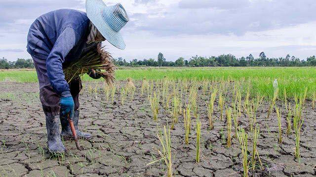 Seceta El Nino