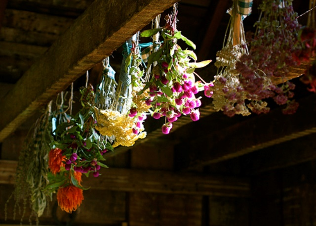 drying-flowers
