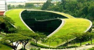 acoperișuri verzi