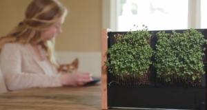 micro-plante