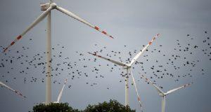 păsări migratoare