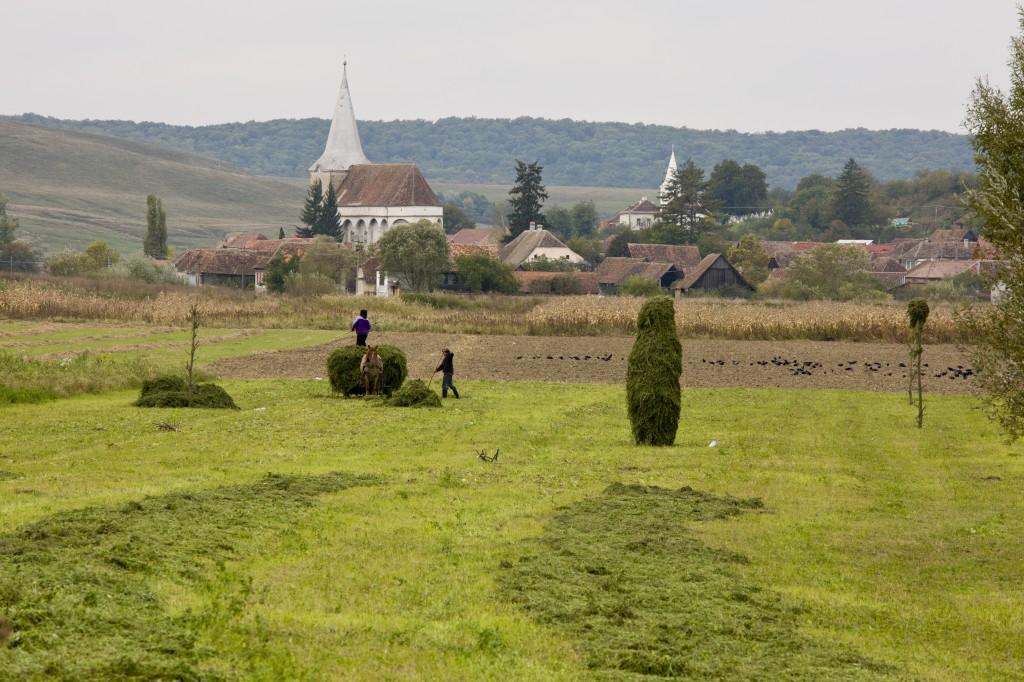 Hay collection by the saxon village of Soars, Transylvania,  Romania