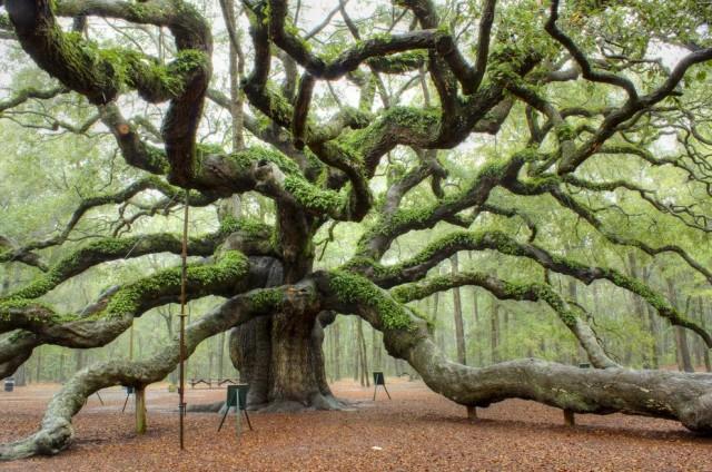 angel-oak