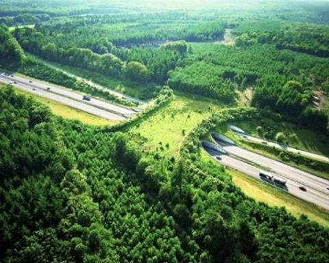 a50-netherlands-animal-bridge-wildlife-crossing-overpass