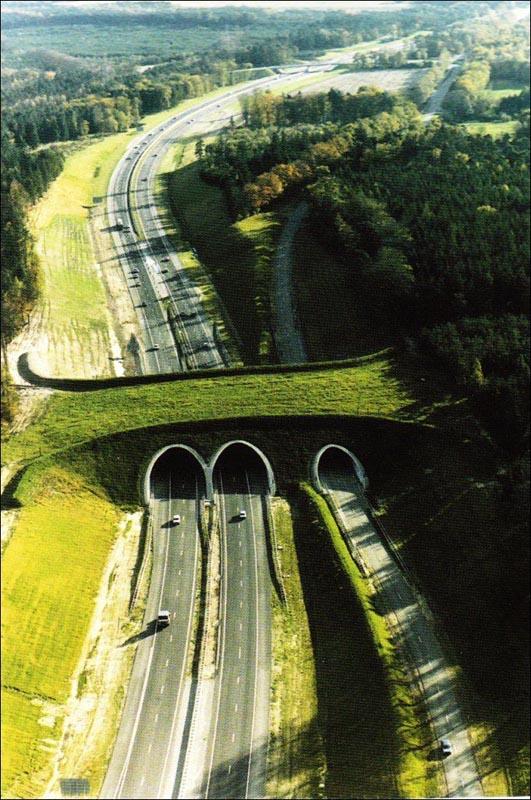 ecoduct-in-the-netherlands-animal-bridge-overpass-wildlife-crossing