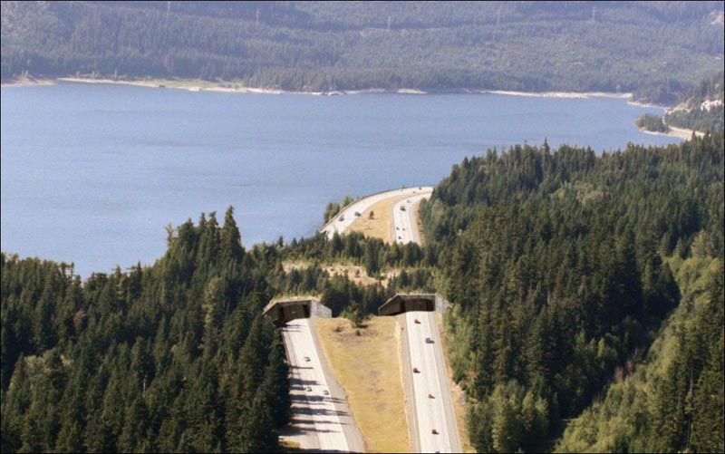 near-keechelus-lake-washington-usa-animal-bridge-wildlife-crossing-overpass