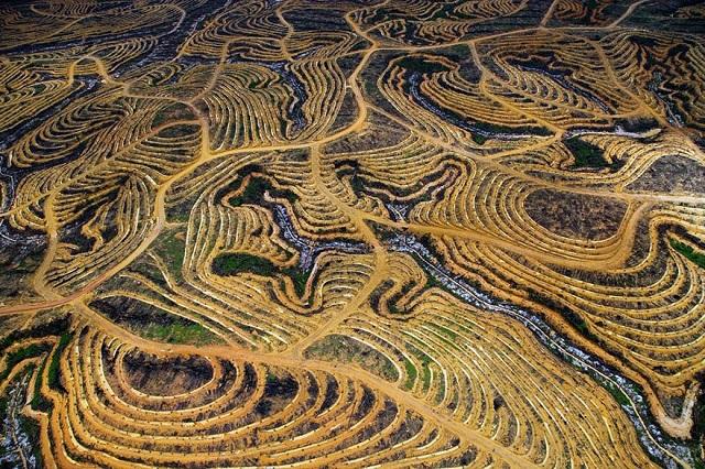 Pădurea ecuatorială indoneziană este defrișată pentru a face loc plantațiilor de palmieri.