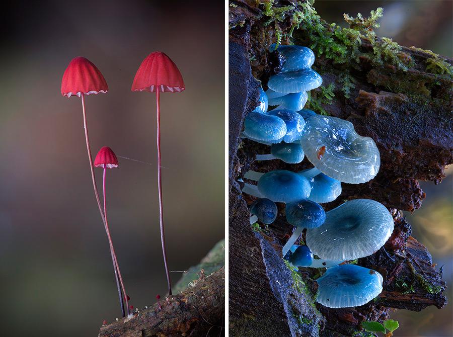 ciuperci Steve Axford