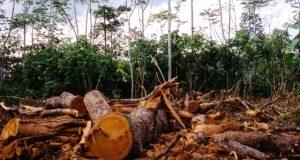 norvegia deforestarea