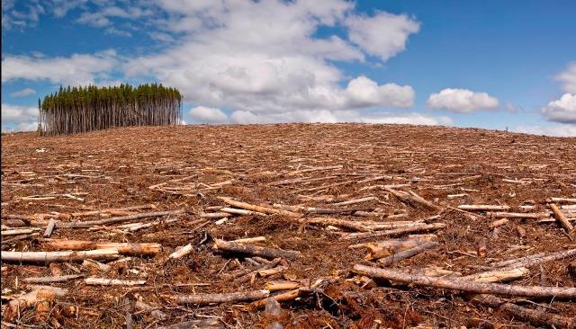 clipuri video despre mediul înconjurător