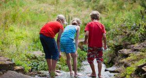 Activități în natură prin care copiii învață să respecte mediul