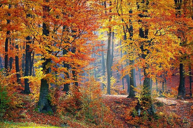pădurile virgine