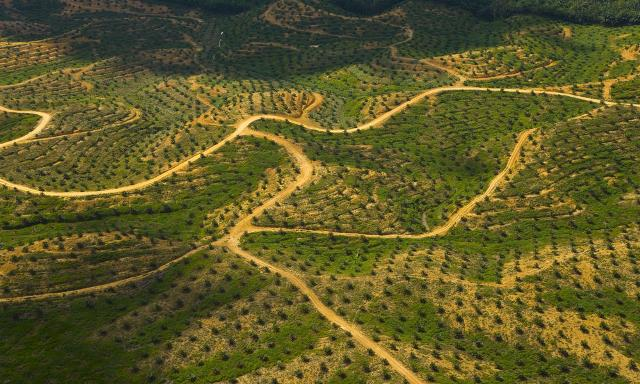nutella uleiul de palmier cancer