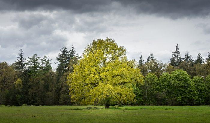 Pădurile UE