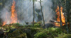 incendiile de pădure