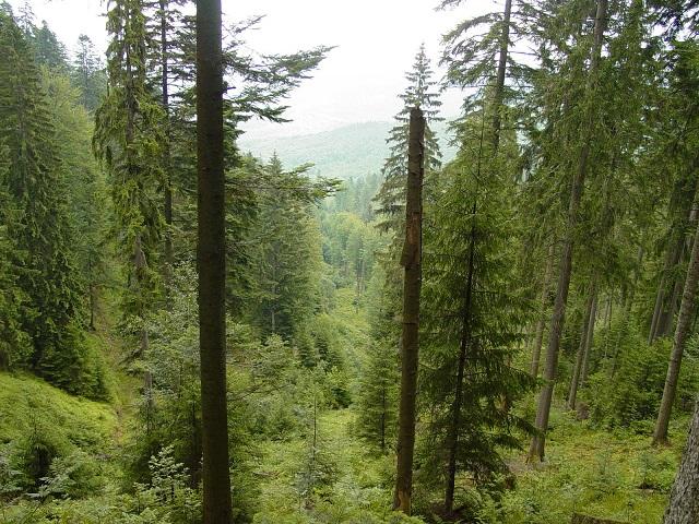 Romsilva nu mai este obligată să păzească pădurile retrocedate