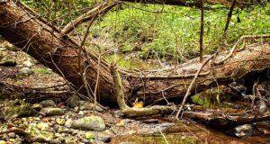 Peste 80.000 de hectare de pădure afectate