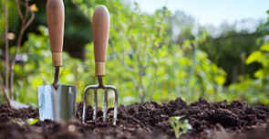 Serial – Pepiniera de grădinari