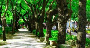 poluare copacii
