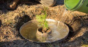 Cocoon, incubatorul care ajută copacii să supraviețuiască și în cele mai aride zone