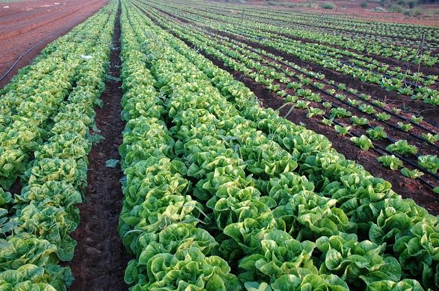 agricultura ecologică