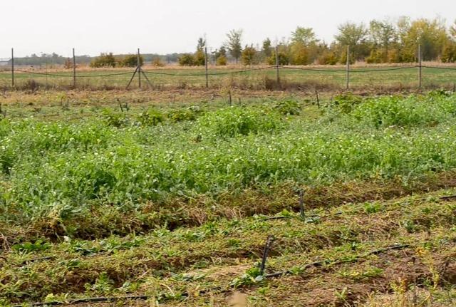 pepiniera de grădinari bio&co