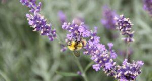 7 flori pe care să le folosești în ritualurile tale de înfrumusețare