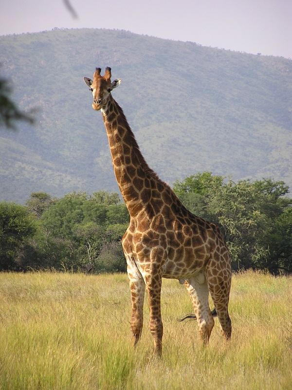 specii protejate