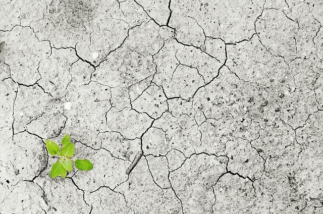 Emisiile din sectoarele agriculturii vor crește în viitor