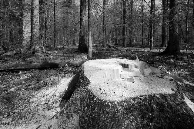 romsilva lemne