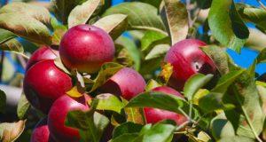 Bicarbonatul de sodiu, cel mai eficient la înlăturarea pesticidelor din mere